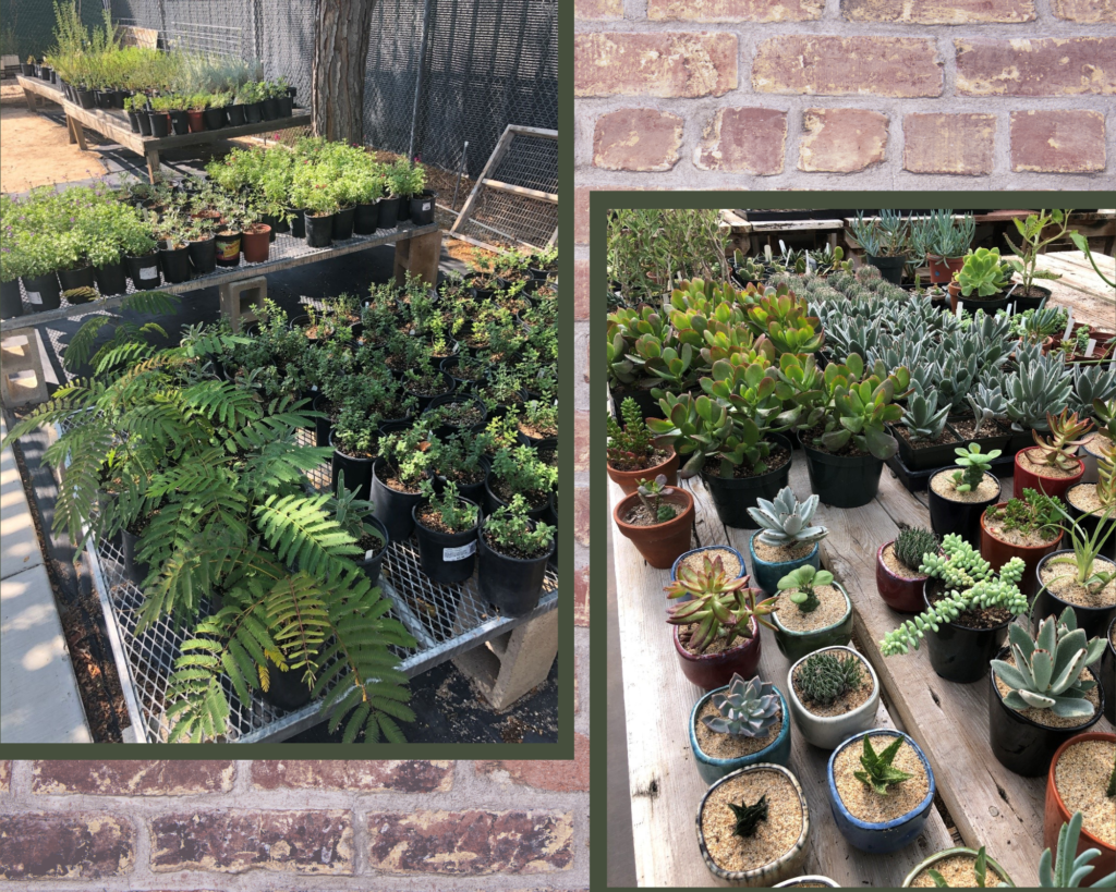 Some of the plants for sale